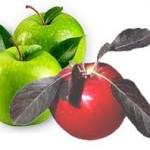Balgam söktürücü bitkisel çay