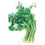 Regl dönemi ağrıları ve şişlikler için bitkisel öneri