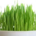 Bugday çimi faydaları(sinir sistemi,dolaşım,göz ve cilt sağlıgı v.b)