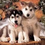 (Gerçek hikaye)Bir köpekten alınacak en güzel vefa,sevgi ve dostluk örneği