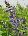 Grip  hastalığı  için  bitkisel öneriler
