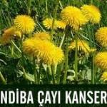 hindiba