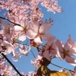 İlk Bahar Duyguları