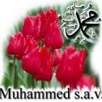 Resulullah(s.a.v) sevgisi