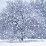 Mutluluklarımızı kar taneleri sayısınca çok eyle