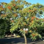 Cennette ağaç diktiren dua
