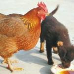 Hayvanların dilin öğrenen adam